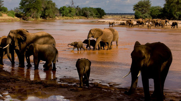Endangered Species Chocolate Offers Sweepstakes Trip To Africa