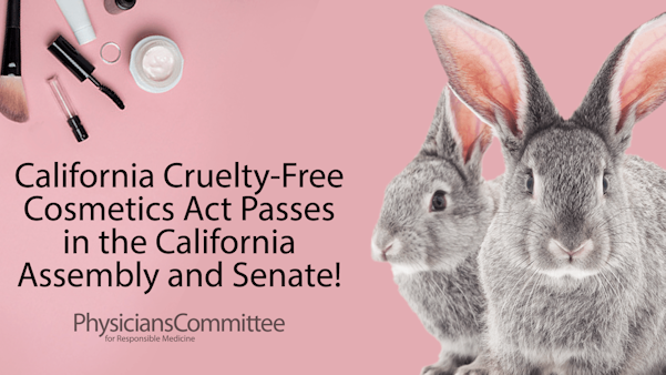 California State Assembly Passes Cruelty-Free Cosmetics Act