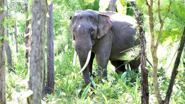 No more rides: Vietnam's first ethical elephant tours begin