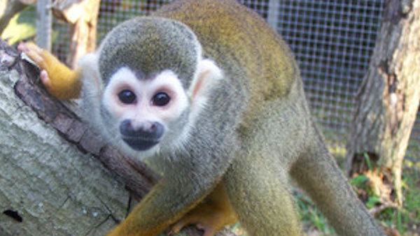 Vegan Sanctuary Welcomes Retired FDA Research Monkeys