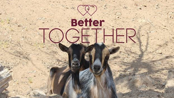 Celebrate Love this Valentine's Day with Gifts from Farm Sanctuary