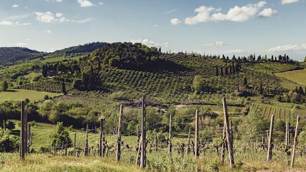 Agrivilla i pini vineyard