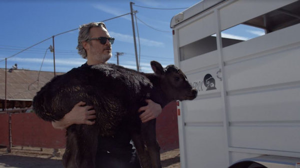 Joaquin Phoenix rescues mother cow and newborn calf from slaughter